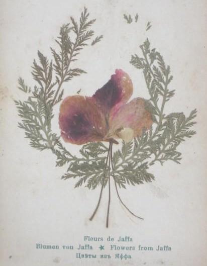 jaffa-flowers